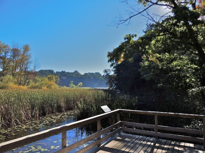 Boardwalk overlooking marsh habitat at Hamilton Royal Botanical Gardens.