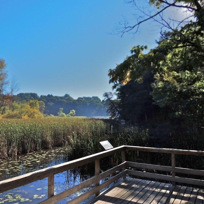 Boardwalk overlooking marsh habitat at Hamilton Royal Botanical Gardens.